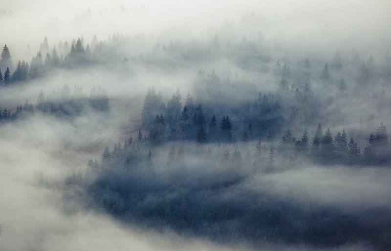 карпаты, осень, утро, туман, деревья ...Trees...photo preview