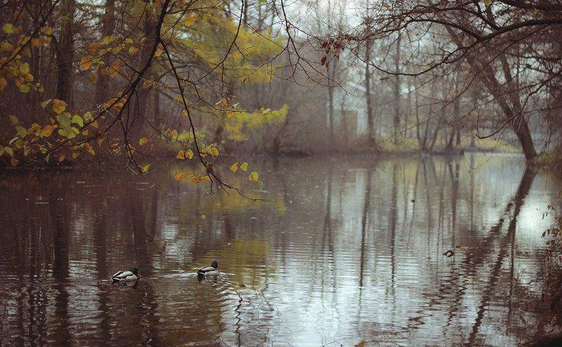 елагин, осень Ноябрьphoto preview