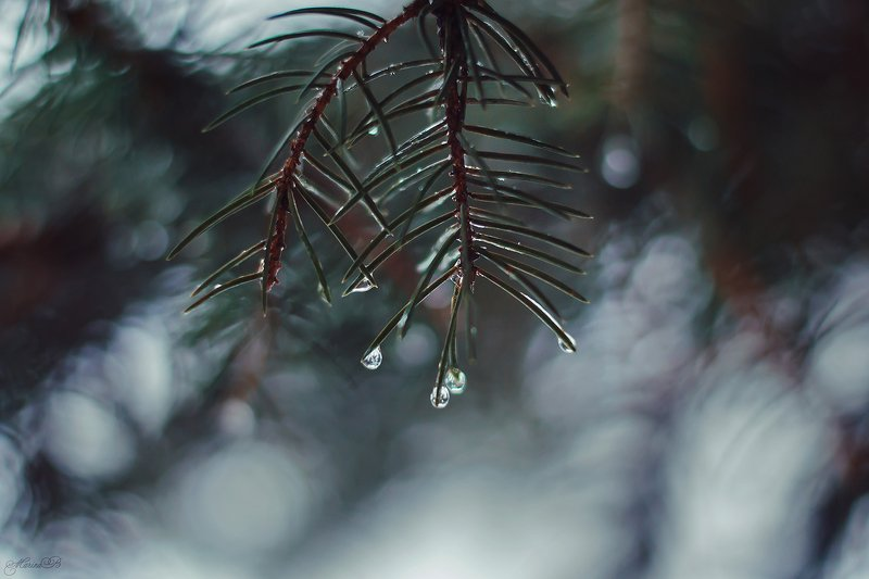 зима, капли, ель, боке, снег Frozen tearsphoto preview