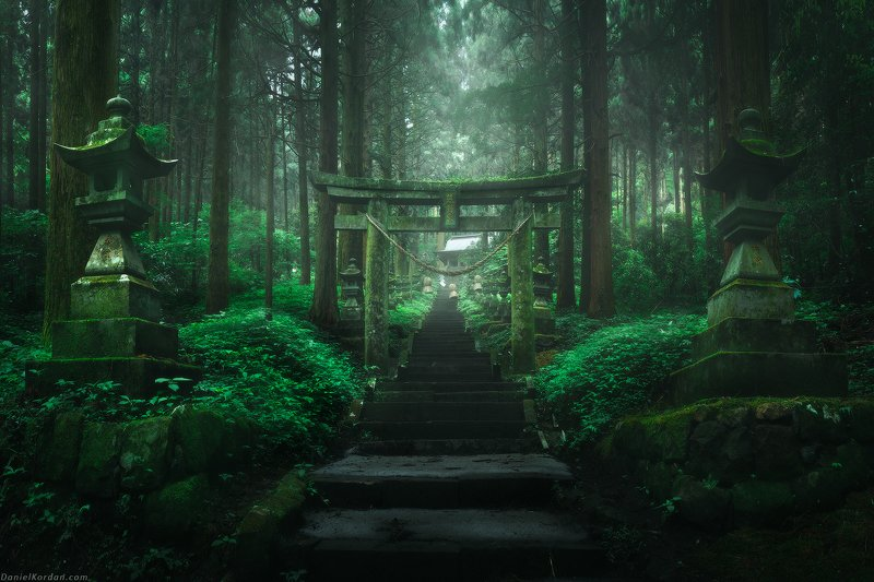 Forest shrinephoto preview