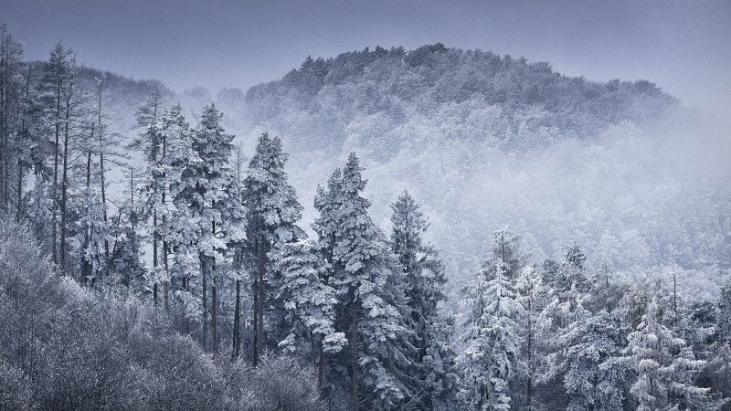dream,landscape,alexandrucrisan,nature,scenery,countryside,far,away,romania,dreamland,magic,sound,lonely,mountain,myromania,forest,trees,winds,hill,tree,white,poem,haiku,minimalism,minimal,winterscape,cold,freeze,breeze,16,panoramic,wintertale Cold Breezephoto preview