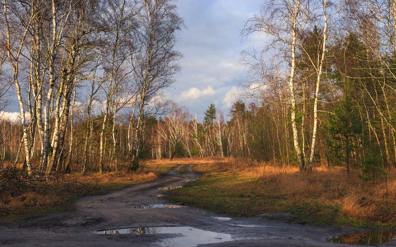 лес, зима, февраль, луг, вечер, закат Межсезонье, февральphoto preview