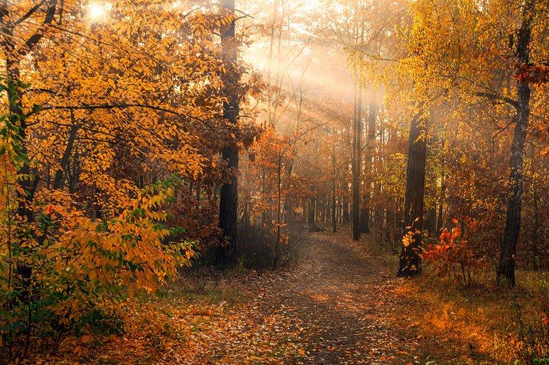 landscape, пейзаж, утро, лес,  деревья, солнечный свет,  солнце, природа, солнечные лучи,  прогулка, прогулка в лесуphoto preview