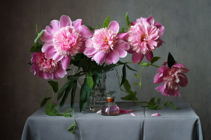 натюрморт, цветы, букет, пионы, лето, июнь Аромат июняphoto preview