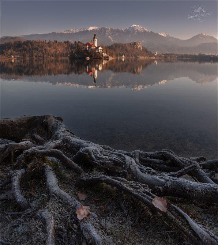 словения, блед, lake bled, slovenia, корни, roots К О Р Н Иphoto preview