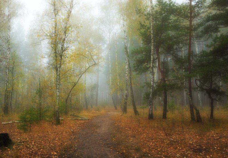 лес, осень, октябрь, утро, рассвет, туман Всё растворялось в белой пеленеphoto preview