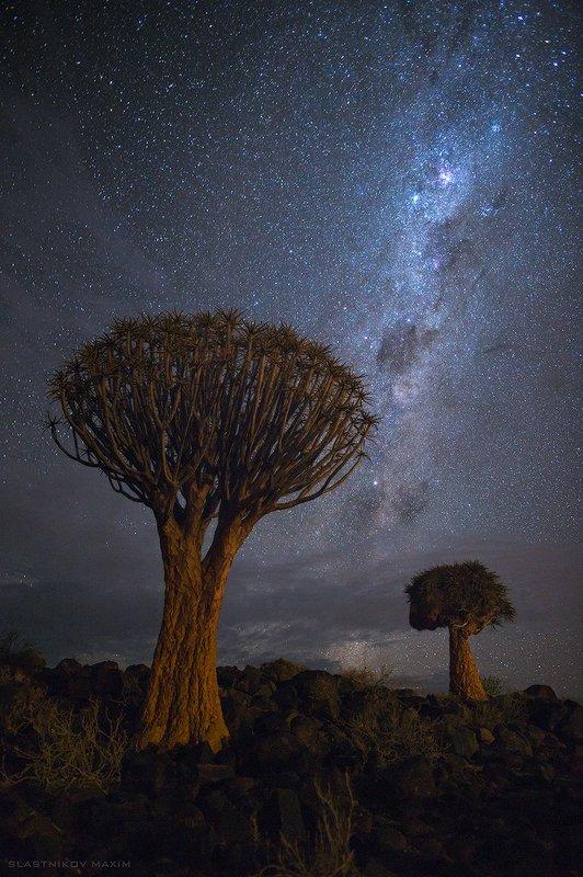 намибия, звезды, деревья, млечный путь, алоэ, камни, пустыня, тучи, карас, африка, лето, южная африка, Africa, Namibia, trees, forest, desert, stars, south Намибияphoto preview
