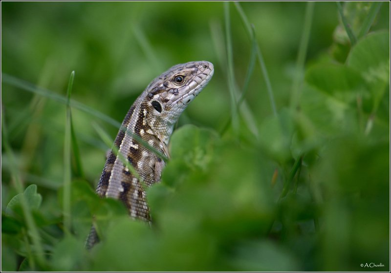 ящерка,моделька Фотомоделька )photo preview