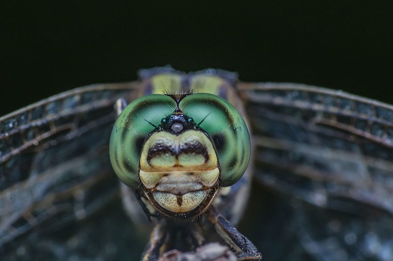 garden, nature, outdoor, macro, close up, dragonfly, fly, wings, insect, sun, lighting, eyes, focus Dragonfly in the gardenphoto preview