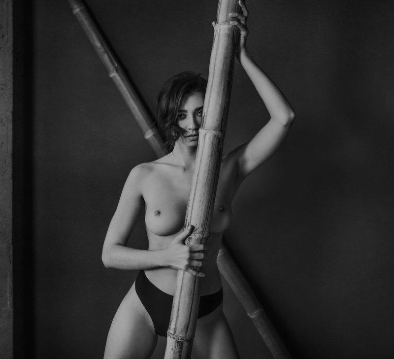 Бамбуковые тростиphoto preview
