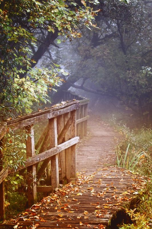 hungary, mycountry, trees, fog, nature, autumn, photography Foggy morning....photo preview