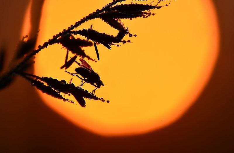 макросъемка, насекомые Тени рассветаphoto preview
