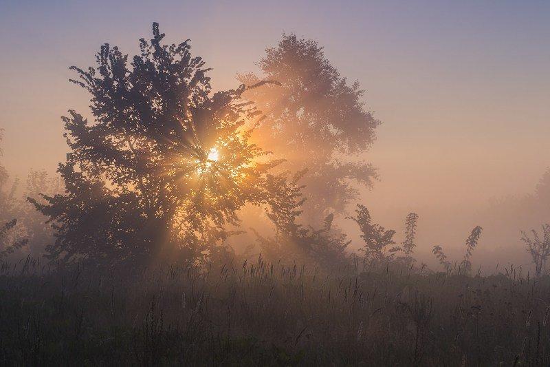 пейзаж,туман,утро,рассвет,солнце,украина,гадяч,сергей корнев,природа,свет,цвет,композиция,искусство,фотография Утренняя звездаphoto preview