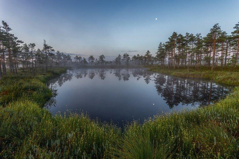 Рассвет на болоте  Ленинградская областьphoto preview