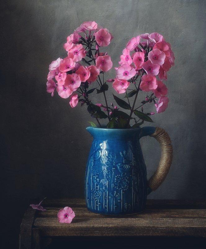 натюрморт,цветы,флокс,лето с флоксами... фото превью