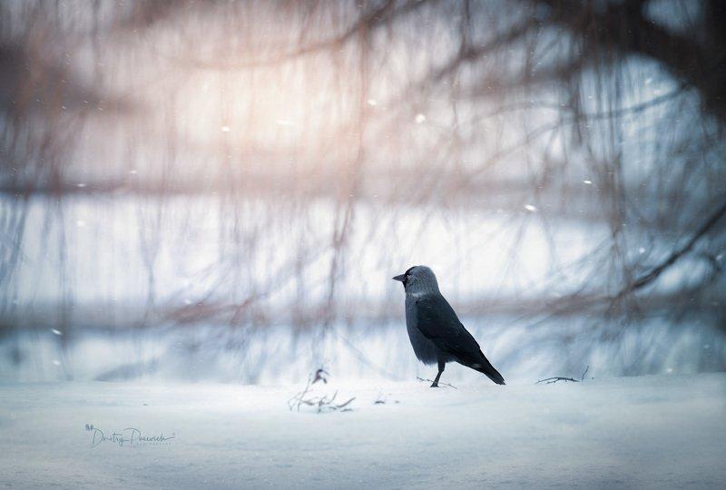 природа, лес, животные, птицы Проводы зимыphoto preview