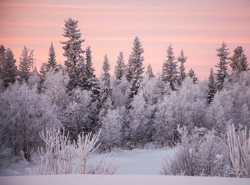 зима,север,пейзаж,рассвет,красота, landscape, winter, beauty, north,dawn,nature Зимушка-зимаphoto preview
