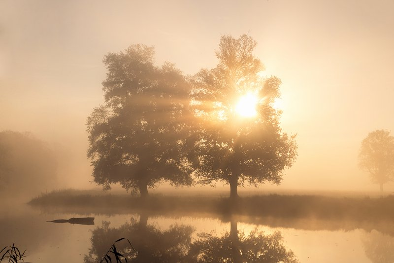 morning in the odra river valley water sun foggy mist magic tree germany trees dranikowski fog sun sunlight Morning in the Odra River Valleyphoto preview