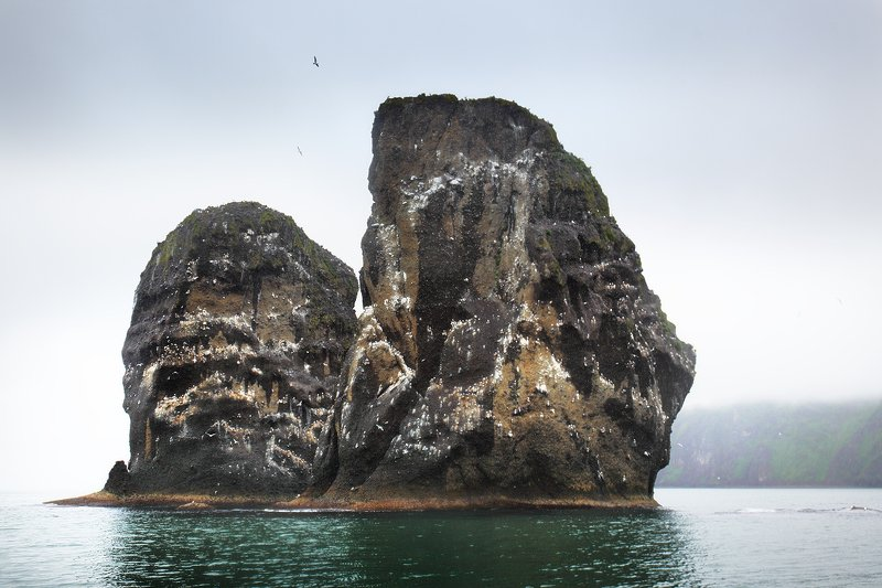 камчатка, тихий океан, скалы, острова, птичий базар Тихий океан. Побережье Камчатки...photo preview