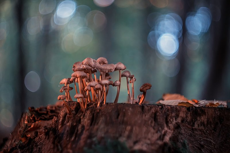 jesień,autumn,grzyby,natura,las, Grzybkiphoto preview