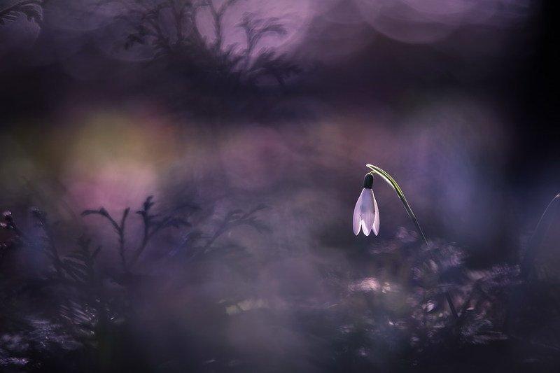 Весна это новая жизньphoto preview