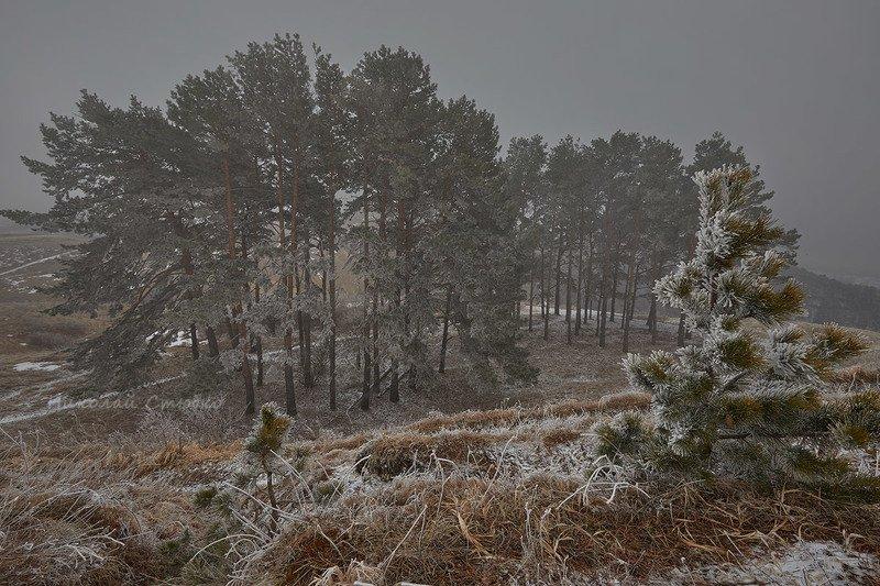 кавказ, горы, туман, март В первый день весныphoto preview