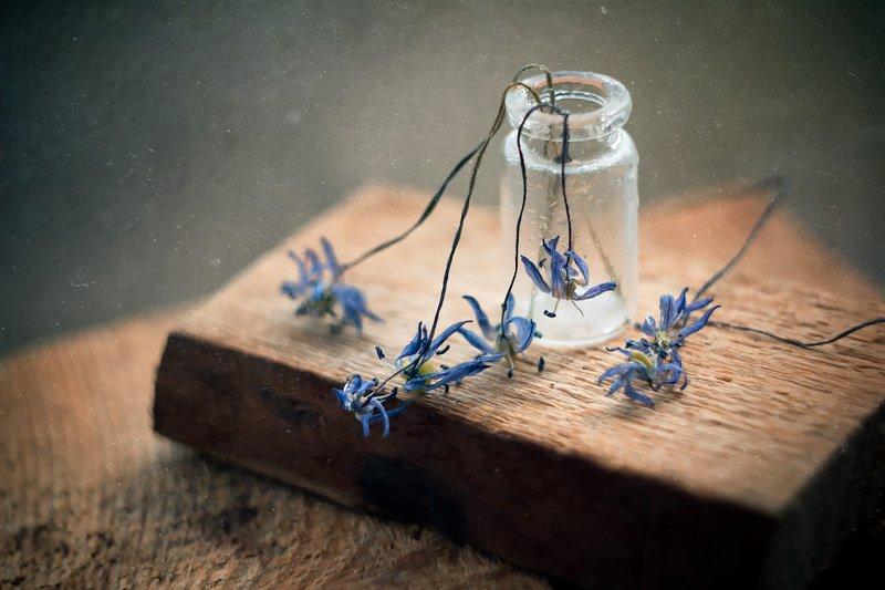 пролески, натюрморт, боке, цветы, брызги, вода, дерево, сухие, бутылка, банка, стекло, красивый, грусть Грустные цветыphoto preview
