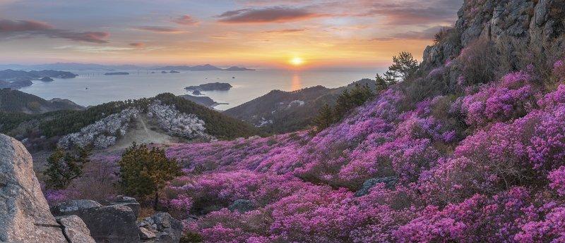 mountains,peak,hiking,spring,blossom,sunrise,panorama,sea,rocks,light,korea,azalea Spring of daegeumsanphoto preview