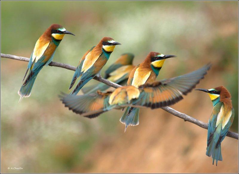 птицы,щурки,май,мест,нет Ну куда ты? Мест нетphoto preview