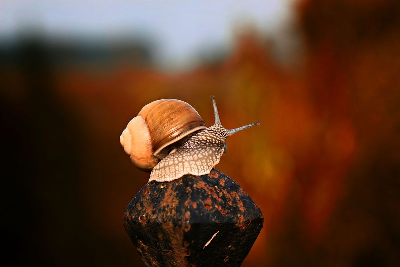 snail, nature,  animals,  photography,  autumn, macro, Snailphoto preview