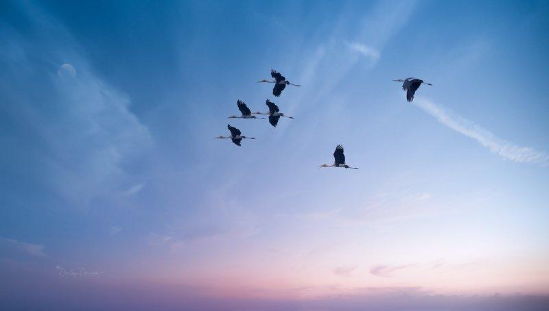 природа, животные, птицы, вьетнам, остров фукок Доброе утроphoto preview