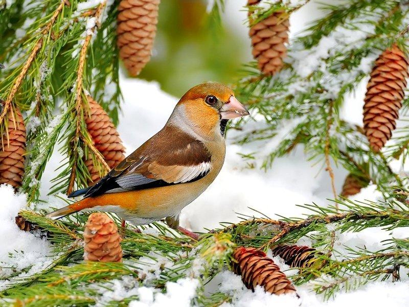 Зарисовка из зимнего леса 6photo preview