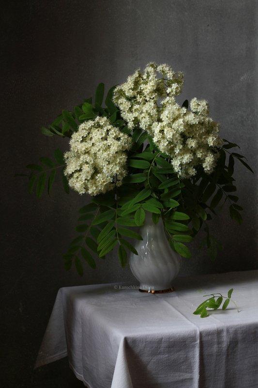 натюрморт, букет, цветы, рябина Рябиновый цветphoto preview