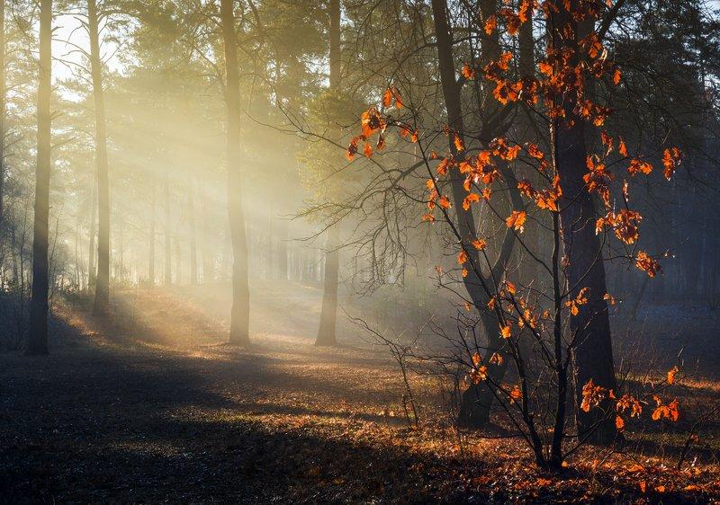лес, весна, март, утро, рассвет, лучи, туман Весенних дней лучистый светphoto preview