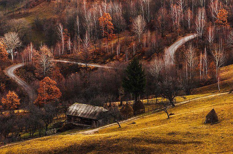 осень, цвета, золотые, дом, утро, деревья Осенние краскиphoto preview