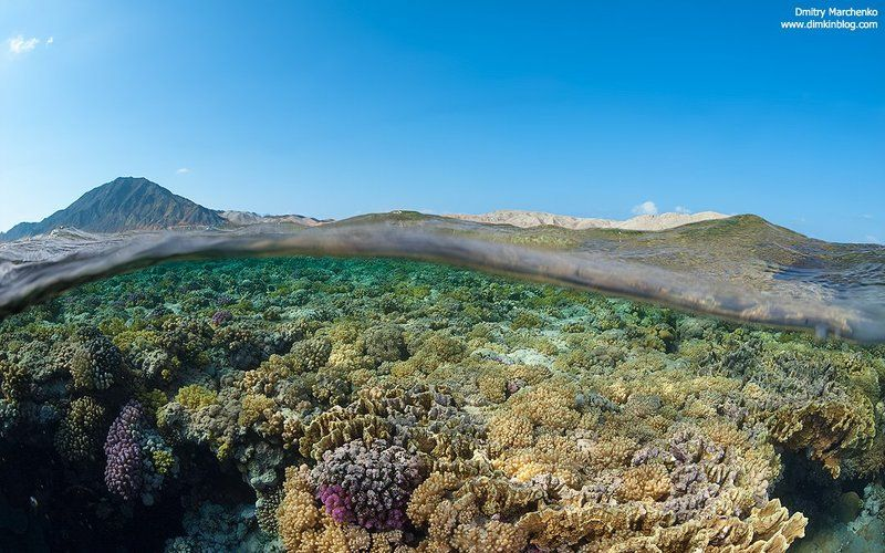 сплит,риф,underwater,split Приподняв волнуphoto preview