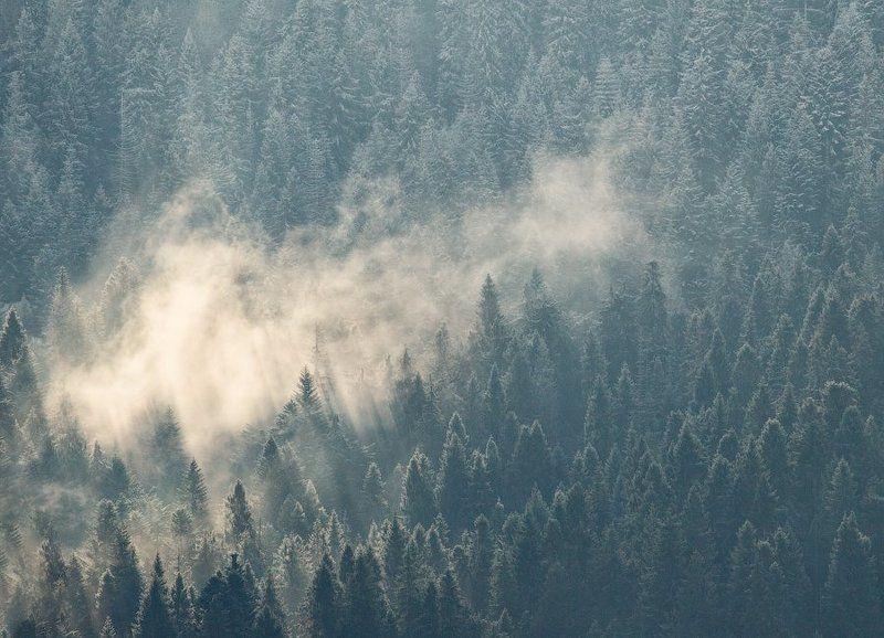 карпаты, осень, утро, туман, лес ...Forest...photo preview