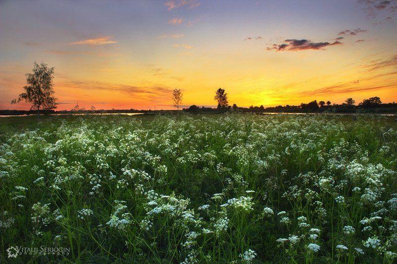 цветы., вечер Цветыphoto preview