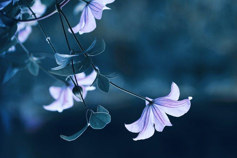 macro, nikon, nature,sigma, цветы, макро, боке Когда-то было лето...photo preview