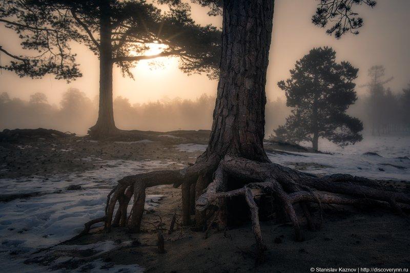 Байкал, лес, пейзаж, утро, туман Танцы утреннего лесаphoto preview