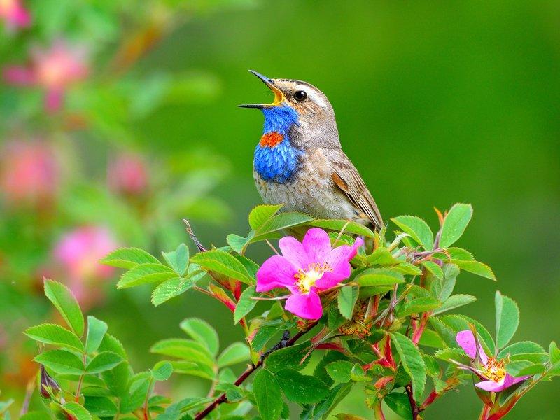природа, фотоохота,  птицы, животные, весна Перелетные птицы.photo preview