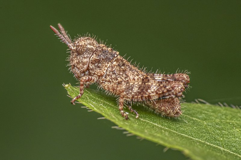 insect, small, beauty, beautiful, macro, close up, green, outdoor, animal, leaf Small insect in the gardenphoto preview