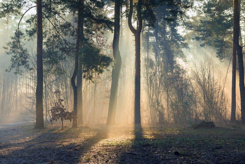 лес, весна, март, утро, рассвет, лучи, туман, испарина Эта мощь и дня и света...Это всё весна!photo preview