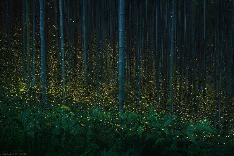 Japan firefliesphoto preview