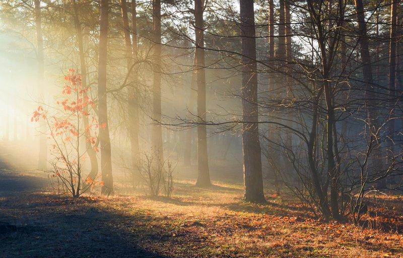 лес, весна, март, утро, рассвет, лучи, туман, испарина Солнце сияет сквозь мартовский лесphoto preview