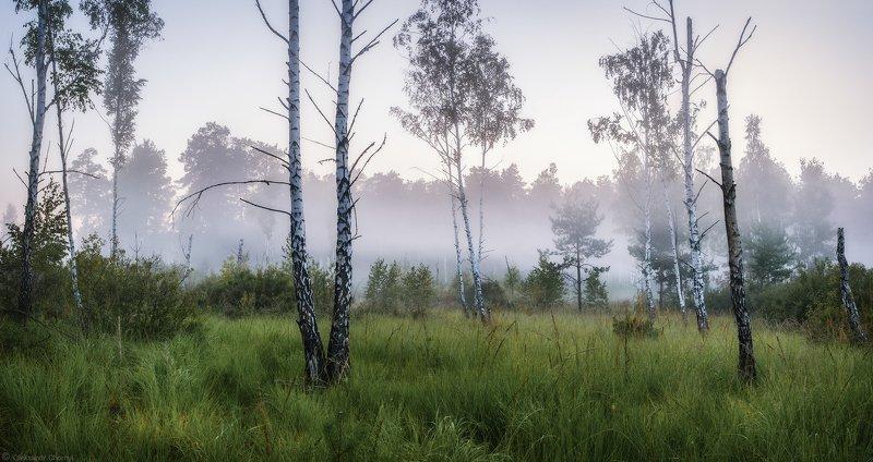 украина, коростышев, пейзаж, природа, лес, полесье, утро, лето, туман, глубина, атмосфера, тишина, уединение, счастье, жизнь, воздух, чистый, вдохновение, трава, любовь, осознанность, дружба, истина, жизнь, березки, деревья, просторы, фотограф, чорный, \