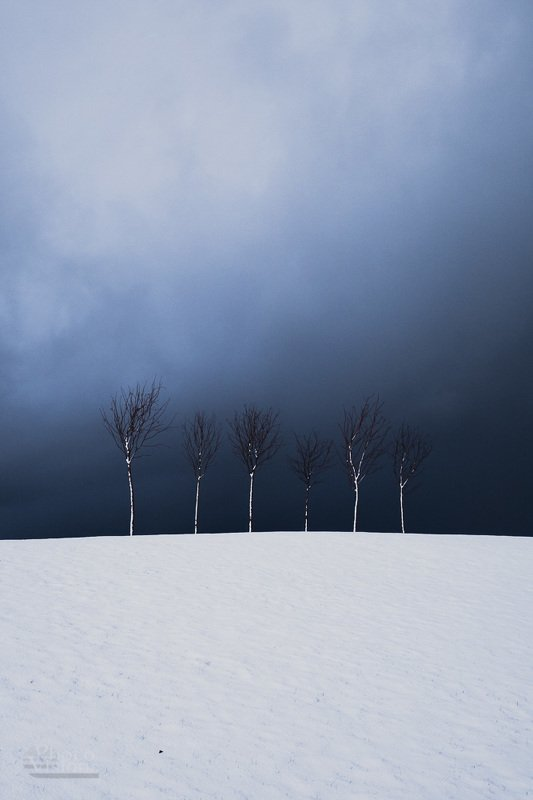 minimal,minimalism,tree,trees,winter,clouds,storm,snow, Minimalismphoto preview