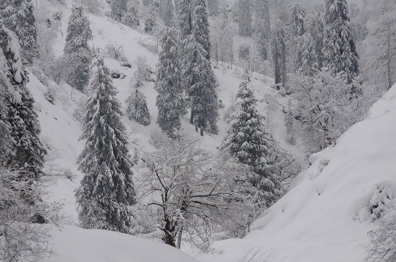 зима, горы, , туман в горах Заилийскихphoto preview