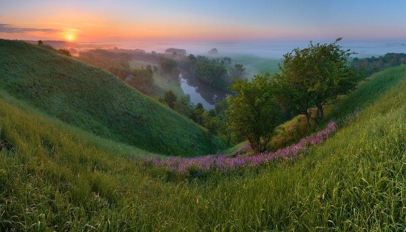 весна, май, пейзаж, утро, рассвет, холмы, река, Псел, солнце, свет, травы, луг, цветы, туман, spring, morning, sunrise, light, sun, flowers, meadows, hills, river, Psel, panorama, view from above, fog, misty, May, springtime, landscape был месяц май ..photo preview