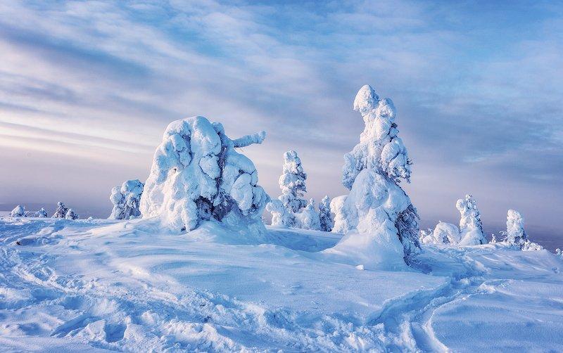 заполярье, гора, снег, ели, волосная Заполярьеphoto preview